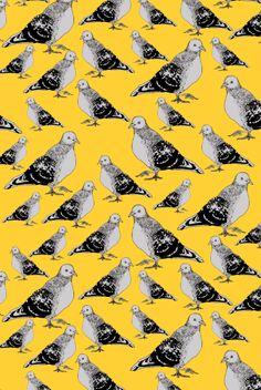 SJGuest, Pigeon Fabric.