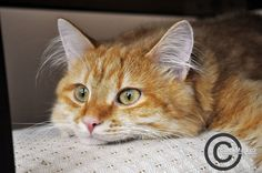 Little cat Jethro by perlaque on DeviantArt
