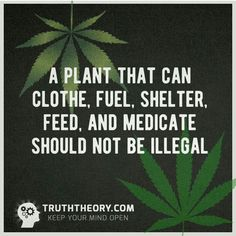 Not only should it not be illegal, but hard-working Americans should reap the profits and not the drug lords . Weed Pictures, Weed Pics, Weed Quotes, Trailer Park Boys, Things To Do With Boys, Medical Marijuana, Cannabis, Smoking Weed, Business Motivation