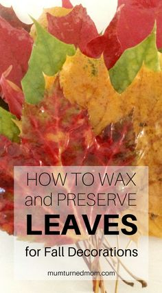 How to Wax and Preserve Leaves for Fall Decorations Fall Crafts For Kids, Diy Arts And Crafts, Decor Crafts, Leaf Crafts, How To Preserve Leaves, Kid Cupcakes, Fun Fall Activities, Autumn Nature, Leaf Art