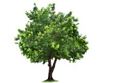 Tree-PNG-Image.png (1024×746)