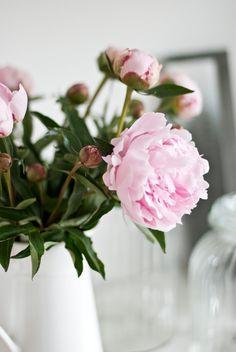 peony, cut flowers, vase, decor, nature, beauty, bouquet