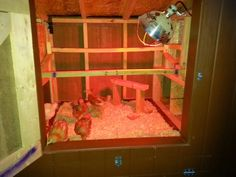 Moving Chicks Out to the New Coop! ~ Simple Suburban Living