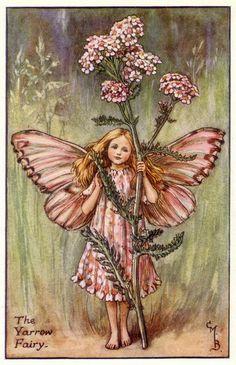 """The """"Yarrow Fairy"""" ... a Summer Fairy ...  by Cicely Mary Barker"""