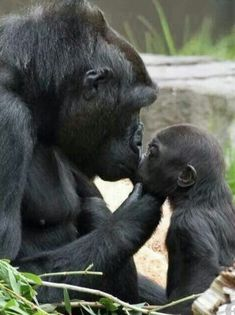 ✔ Baby Animals And Their Mothers Beautiful Creatures Cute Funny Animals, Cute Baby Animals, Mother And Baby Animals, Nature Animals, Animals And Pets, Strange Animals, Wild Animals, Beautiful Creatures, Animals Beautiful