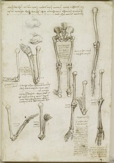 Leonardo da Vinci, 1452-1519, Italian, The bones of the arm and leg. The surface anatomy of the shoulder, c.1510-11. Pen and ink with wash, over black chalk. Royal Collection Trust, Windsor.