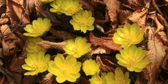 Flowers Yellow Leaves