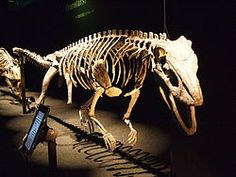 Sillosuchus is a genus of poposaurid crurotarsans from the Late Triassic of Argentina. It had an estimated length of about 3 m (10 ft).