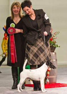 Turku TOP DOG SHOW 2013. FCI 3: Texforrier Get Of My Cloud, Smooth-haired Fox Terrier