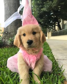 "Norby ♥️ on Instagram: ""I'm the 👑 of Halloween 💕"" Cute Animal Memes, Cute Animal Pictures, Funny Animal Videos, Cute Funny Animals, Cute Baby Animals, Animals And Pets, Cute Puppies, Cute Dogs, Dogs And Puppies"