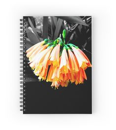 'Clivia Cluster' Spiral Notebook by Moonshine Paradise  #redbubble #flower #nature #photography #art