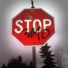 Let's go ahead and debunk all the lies that Monsanto is spreading to convince consumers that GMOs are good for our health. They don't want people to know the truth because that would mean bad business for them, so the more informed we are, the smarter we become at choosing foods that are actually good for us. Check out these 10 ridiculous myths about GM crops at http://homeandgardenamerica.com/10-gmo-myths-that-monsanto-wants-you-to-believe