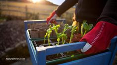 I can't believe this!!! Government intensifies persecution of gardeners in attempt to criminalize self-sufficiency