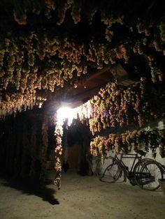 I sotterranei di Dioniso