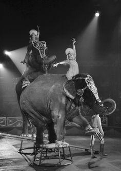 El circo mexicano perdió la grandeza animal | VICE | México