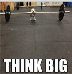This is how I feel when I workout with the big boys :) Funny Dogs, Funny Animals, Cute Animals, Funny Gym, Funny Shit, Gym Humor, Workout Humor, Workout Fun, Think Big