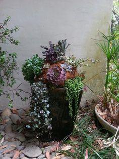 Pots for Succulent Gardens | succulent pot for our front door
