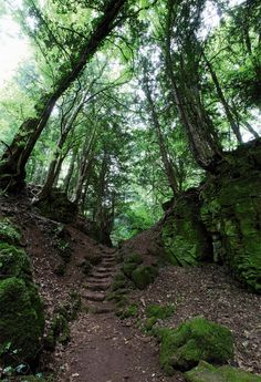 Puzzlewood, an ancient site in the Forest of Dean, Gloucestershire, England. Its said to have inspired J.R.R. Tolkien and J.K. Rowling and is  one of the filming sites for BBC's Merlin and Doctor Who.