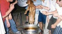 Right now in Moran Market, South Korea thousands of dogs are being tortured for the 60 day dog torture fest called Bok Days. They believe if the dog is tortured they will receive the benefits and it will aid their sexual powers.  We are requesting that Ban Ki Moon (Lead on Millennium Education) be made aware of this and take immediate action. This is a disgusting and barbaric act of unnecessary cruelty. This evil practice has no place in any society and should not be accepted.