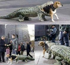 20 Crazy Dog Costumes You Would Love To Put On Your Pooch | Pinterest | Awesome dogs Crazy dog and Dog & 20 Crazy Dog Costumes You Would Love To Put On Your Pooch ...