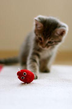 red mouse & simon by Ebru Özcan Akın on Flickr.