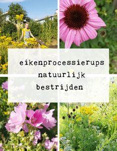 Eikenprocessierups natuurlijk bestrijden - begin een eco tuin Im Not Perfect, Balcony, I'm Not Perfect