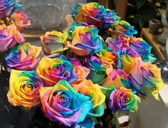 Rainbow roses    The method exploits the rose's natural processes by which water is drawn up the stem. By splitting the stem and dipping each part in a different colored water, the colors are drawn into the petals resulting in a multicolored rose.