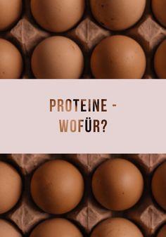 Wofür benötige ich Proteine und wie viel davon soll ich zu mir nehmen?  #protein #proteine #proteinpulver #ernährung #eiweiß #eiweissshake #fitness #sport #training #ernährungsplan