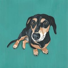 Custom Pet Portraits by Manda Wolfe
