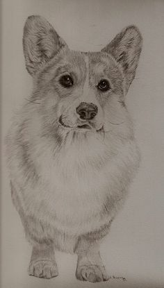 Pembroke Welsh Corgi - Alert and Affectionate Cardigan Welsh Corgi Puppies, Welsh Corgi Pembroke, Corgi Dog, Animal Sketches, Animal Drawings, Dog Sketches, Corgi Drawing, Corgi Pictures, Cute Corgi
