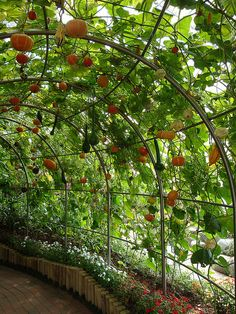 There are countless people in this world who don't have the pleasure of making their way outside and breathing in the fresh air from their own yard. Backyard Vegetable Gardens, Vegetable Garden Design, Farm Gardens, Outdoor Gardens, Grape Trellis, Arch Trellis, Garden Arches, Home Landscaping, Hydroponic Gardening
