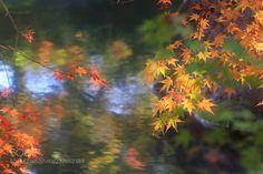 autumncollar by makoto_isa