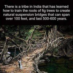 If some 500 year old bloke can train a tree to create a bridge then by the atoms I can train a dragon damn it! Cool Places To Visit, Places To Travel, Places To Go, Tribes In India, Ficus Elastica, Suspension Bridge, Wtf Fun Facts, Random Facts, Epic Facts