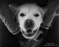 Playful Dog = HAPPY DOG