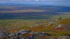 Photo by Tim Bird Photo  Kittilä, Finnish Lapland Endless views and fabulous 'ruska' autumn colours Autumn Colours, The A Team, Filming Locations, Arctic, Finland, Wilderness, Bird, Birds