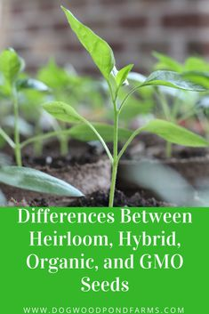 There are all several types of seeds, including hybrid, heirloom, organic, and GMO. There are some differences among these seeds, and as you will see, there are benefits and drawbacks to each.