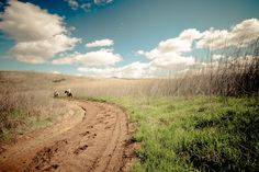 take a leisurely trail ride on horseback through the dusty roads in covington, ky!