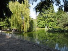 Pond with the islet in Danube park. (Photo by László Takács).