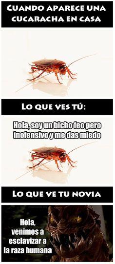 Cucarachas en casa jaja meme risa