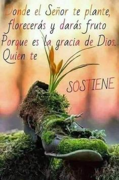 Gods Love Quotes, Good Day Quotes, Quotes About God, Good Morning Quotes, Faith Quotes, Spanish Inspirational Quotes, Motivational Phrases, God Prayer, God Loves You