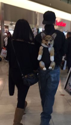 Corgi puppy going shopping http://ift.tt/2ku9dAE
