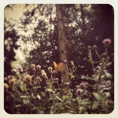 Riposini su un fiore :)
