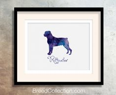 Rottweiler Dog  Watercolor  Breed Collection  Digital by TriPodDog
