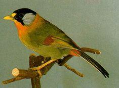Recanto dos pássaros: A lenda do rouxinol