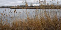 Laguna (antigua gravera) del Soto de las Juntas, en el Parque del Sureste (Madrid). EFE/JJ Guillén