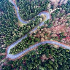 Heart beat curve  A road in Switzerland finding its way through the forest looking like a heart beat signal. The average highway would be a dead heard road comparad to that   #road #aerial #forest #curves #heart baet #dronephoto #aerialphotography #Kurven #Strasse #Switzerland #luftaufnahme #herzschlag #landschaft #landscapephotography