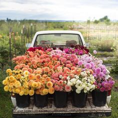 Order flowers online from a local flower shop in Rocky Point, NY. Flowers on Broadway florist, offers fresh flowers, hand-delivered to homes and offices in NY. Cut Flower Garden, My Flower, Cactus Flower, Flower Gardening, Container Gardening, Fresh Flowers, Beautiful Flowers, Exotic Flowers, Purple Flowers