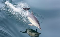 Download wallpapers dolphin, sea, mammal, jump over the water, waves