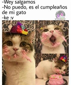 Mi new escusa Funny Memes, Jokes, Spanish Humor, Kawaii, Little Pets, Animal Memes, Funny Cute, Cute Animals, Kitty
