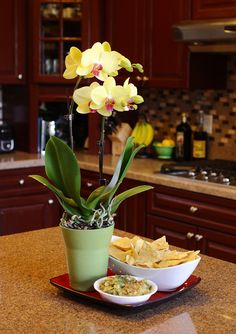 Yellow Orchid in Kitchen